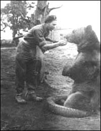 Iran Chamber Society: History of Iran: The Iranian Soldier-Bear of ...